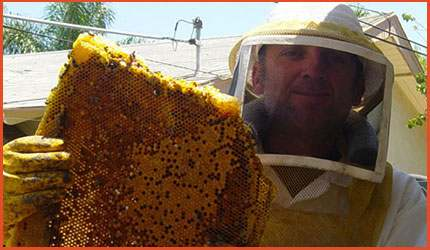 Bees-&-Wasps-Removal